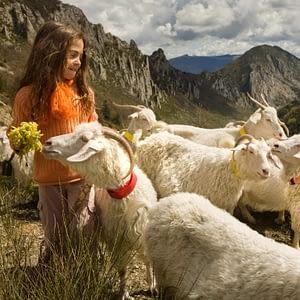 Lila et le troupeau